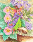 Primrose Fairy